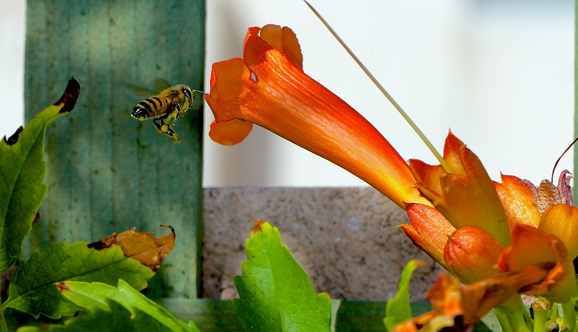 Las Vegas Wildlife, Steven Larson, bee, flower