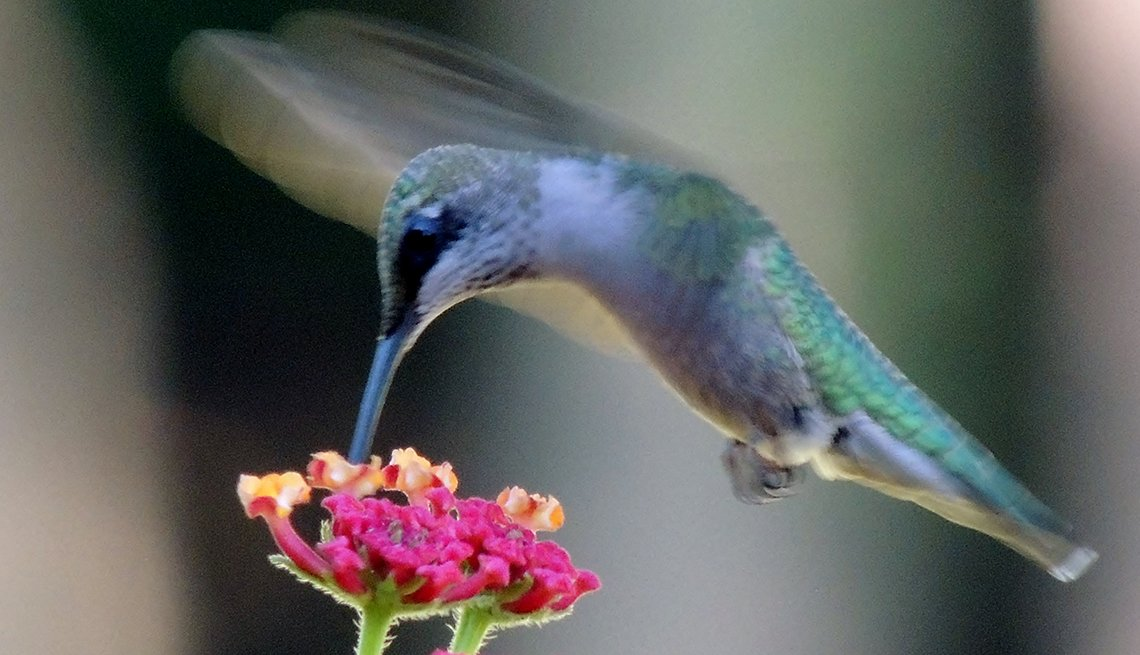 Hummingbird, Flower, Calendar Contest,  David Briggs