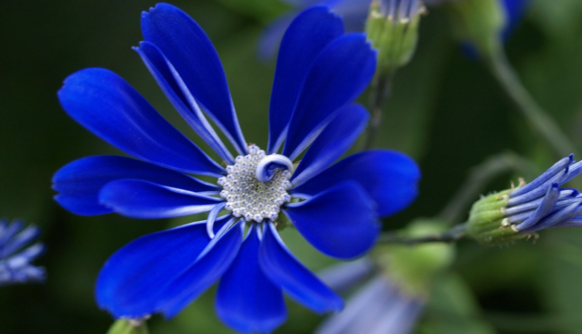 Flower, Blue, Calendar Contest, Barbara Dahl