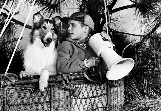 Lassie and Timmy in hot air balloon stuck in tree