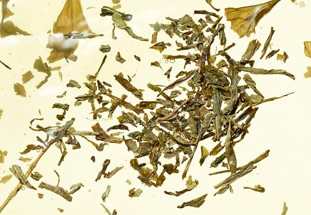 green tea and tea leaves
