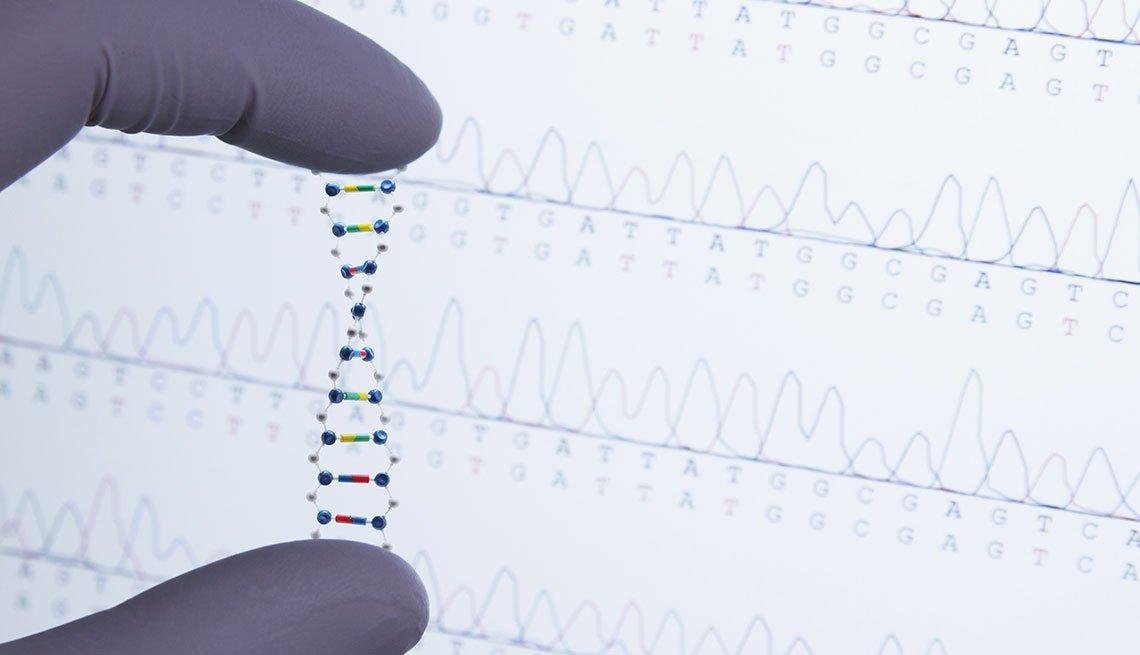 Candena de ADN