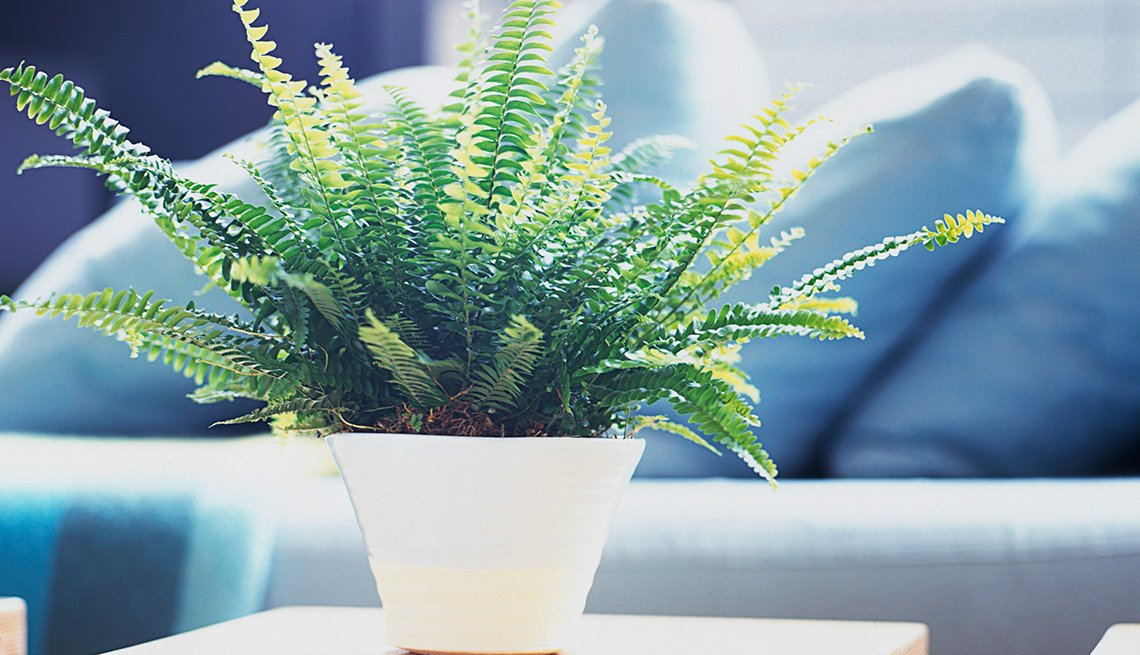 Fern in a white vase, Healthy Holiday Gift Guide
