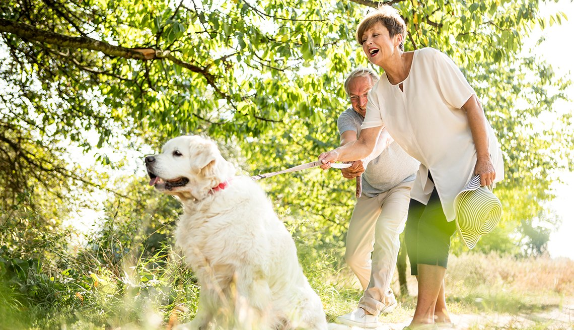 older couple struggling with walking a large white dog