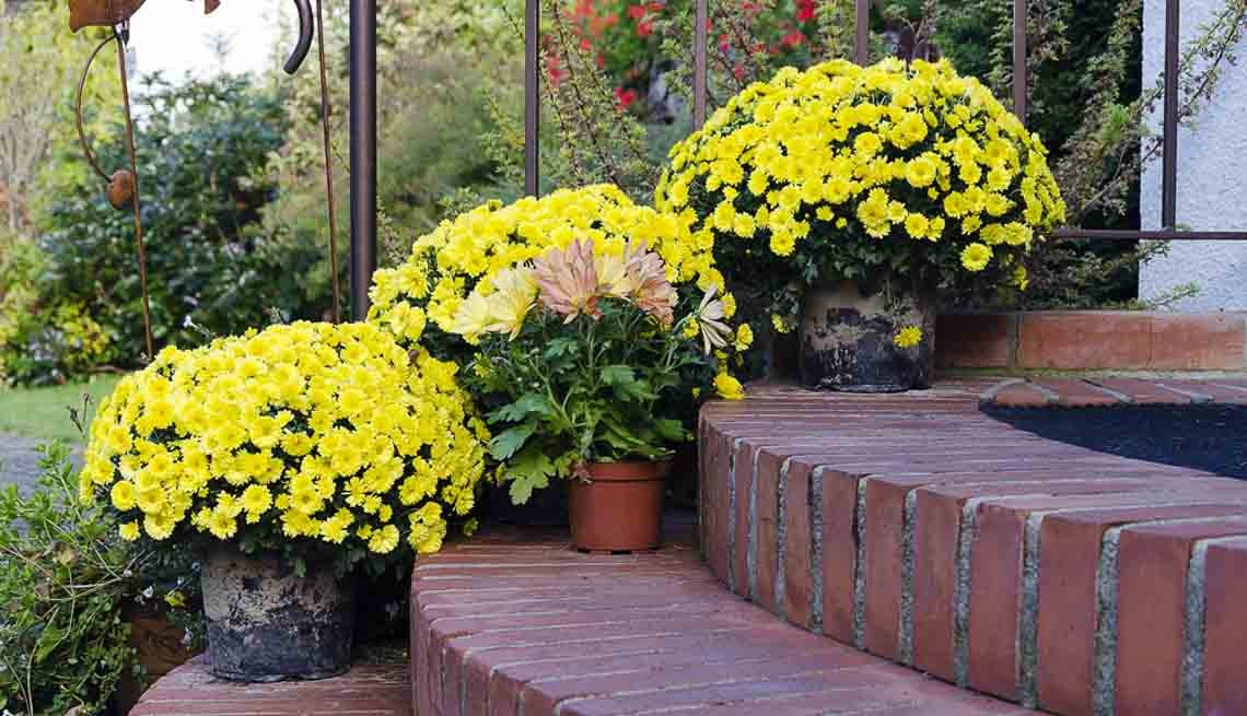 Potted yellow flowers leading up to a home entrance, 10 Ways to Add a Curb Appeal to your Home