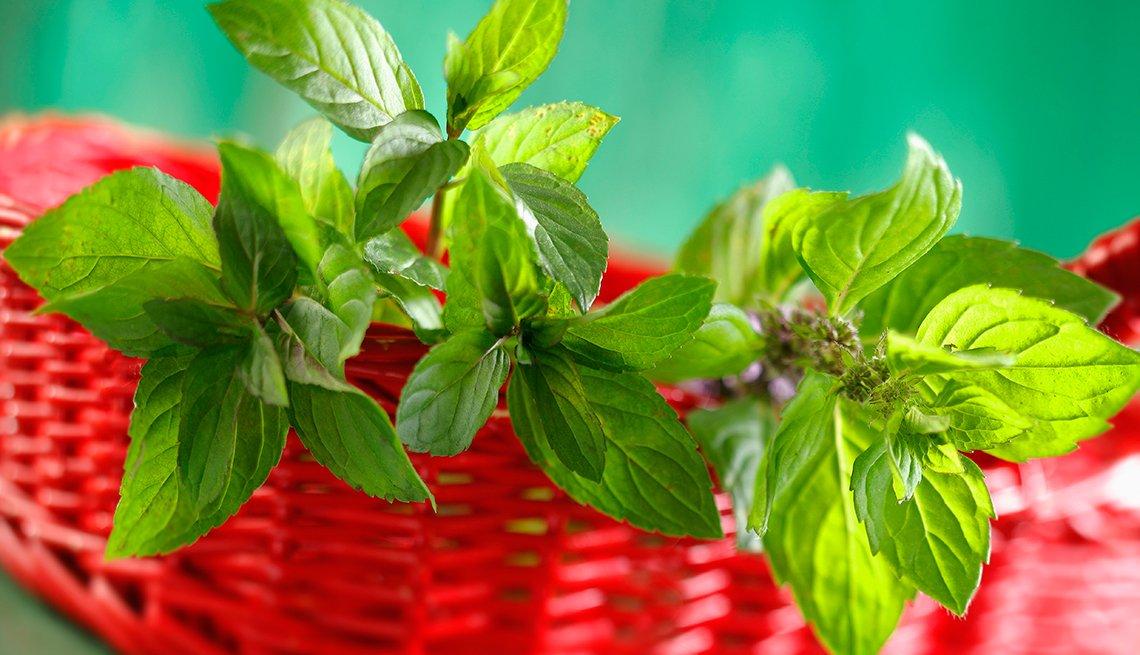 Menta, 10 Hierbas y verduras más fáciles de plantar en su jardín