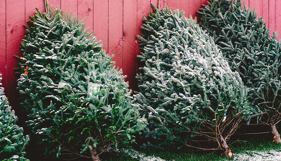 Be Ready to Pay More for a 'Real' Christmas Tree