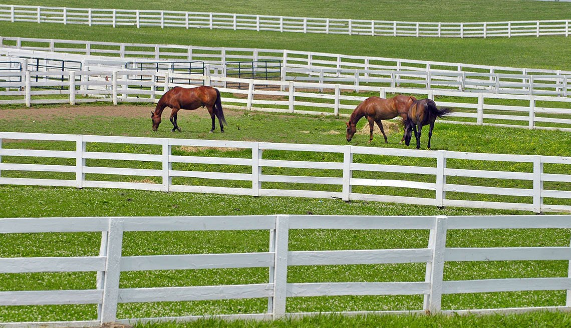 Horses In A Fenced In Field, Grass, Lexington, Kentucky, Livable Communities, Great Cities For Older Adults