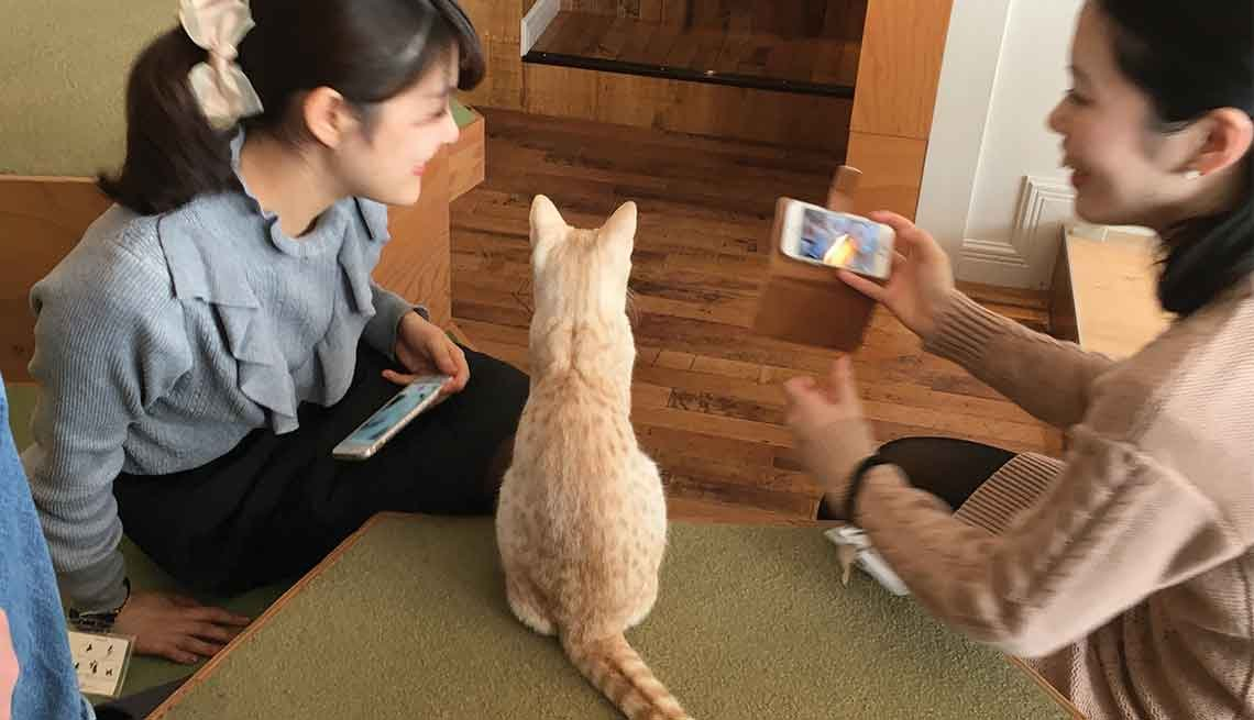 Two young women visit with an orange cat in a Tokyo cat cafe.