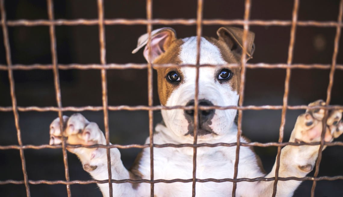 Lower Pet expenses - Save a Life — and Money — by Adopting