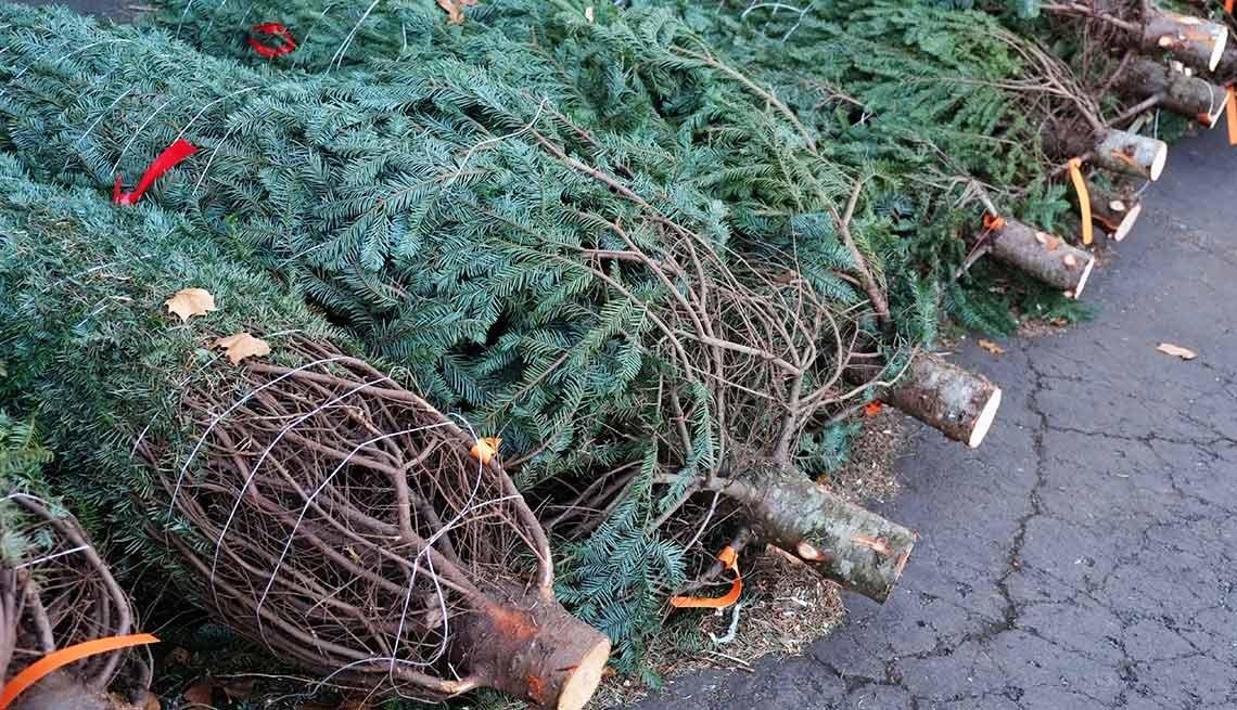 frugal holiday season ideas - Christmas trees
