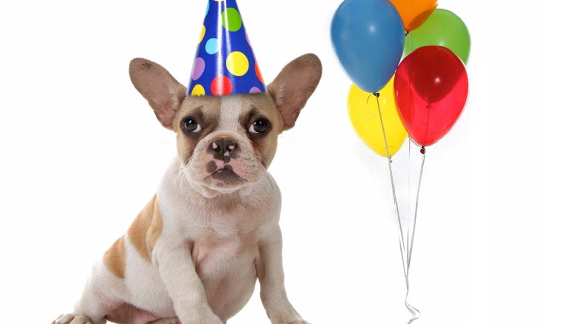 Perro con gorro de cartón de cumpleaños y unos globos de colores al lado, y no te olvides de los descuentos de cumpleaños
