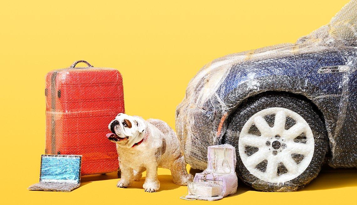 Un perro con en fondo de una maleta, un computador portátil,  y un carro forrados en plástico para aquellos seguros que no son necesarios