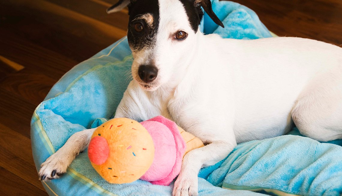 Dog in Bed with Toy, Common Spending Regrets