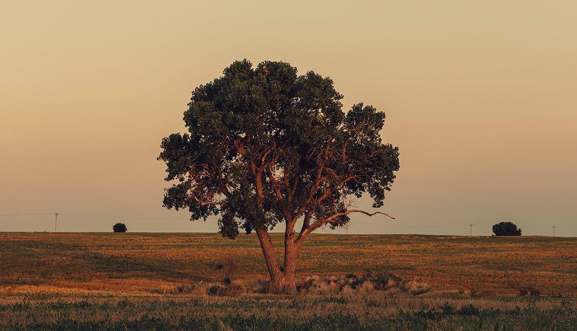 Nicodemus homecoming family reunion - lone tree