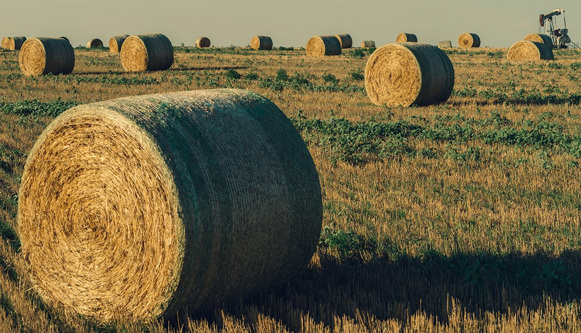 Nicodemus homecoming family reunion - Groups of hay bails in Graham County, Kansas