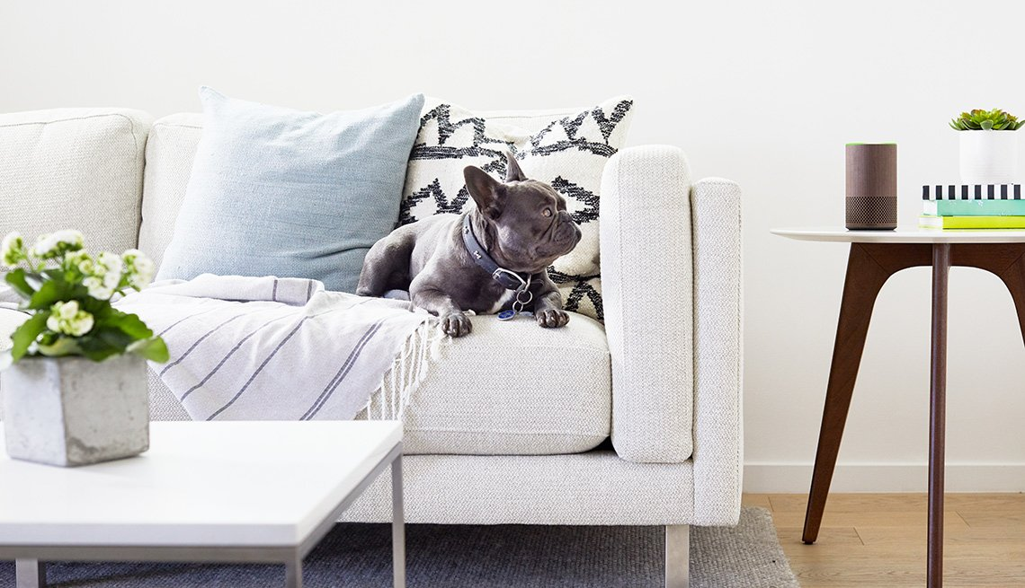 dog sitting on a couch looking at an Amazon Echo