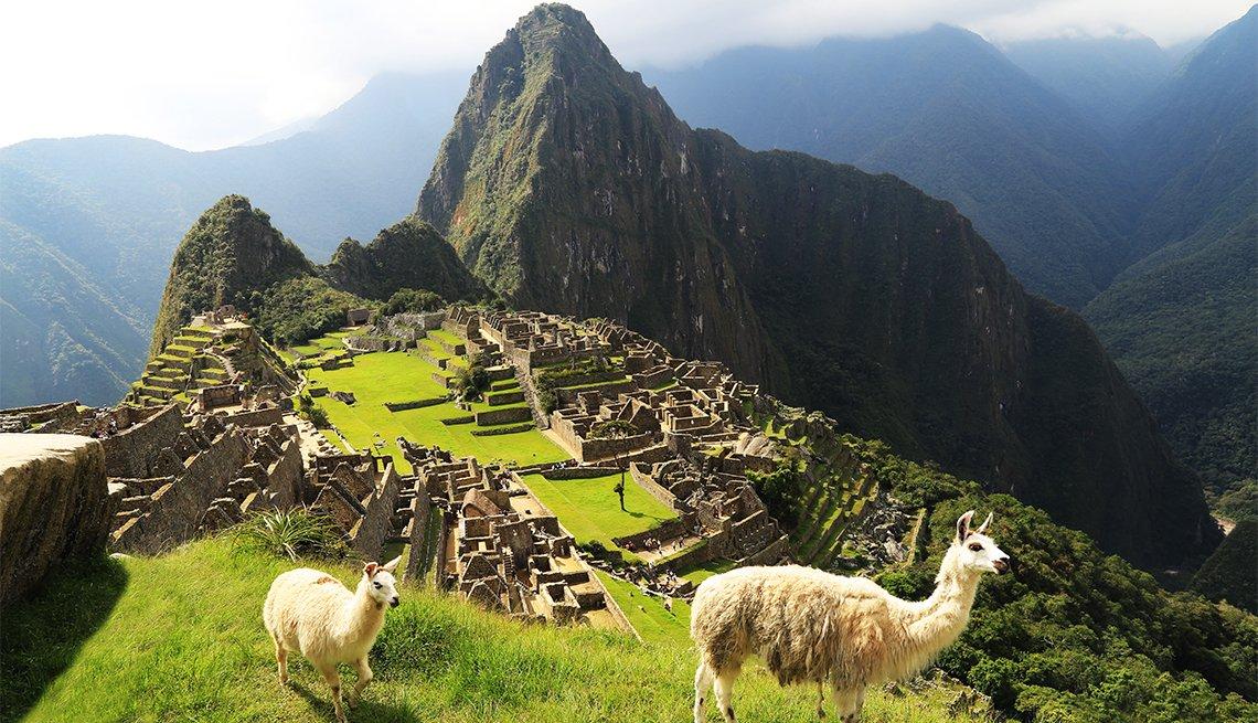 Llama en Machu Picchu, Perú
