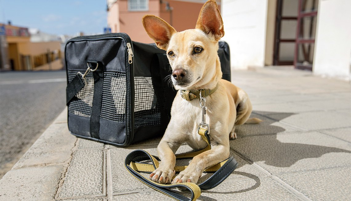 Family Travel With Dog