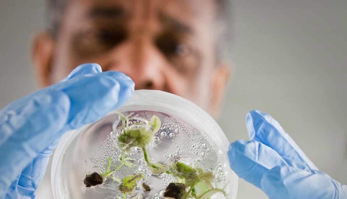 Trabajos con poco estrés, pero bien pagados como mánager de ciencias naturales observando plantas