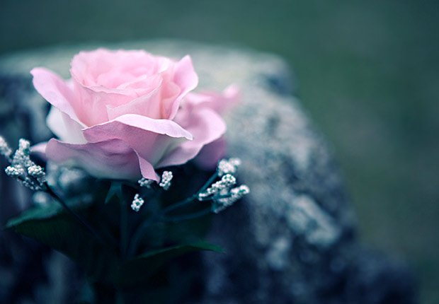Rose on a casket, AARP Social Security Mailbox Top 10 questions asked