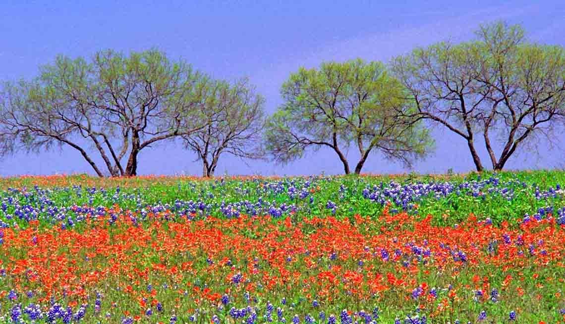 Affordable Spring Trips Fredericksburg