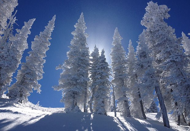Winter Light by Kim Williams. 2014 Calendar Contest Winners.