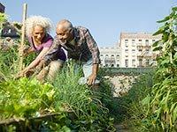 Pareja de adultos mayores trabajando en un huerto