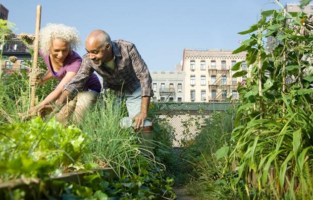 Senior Hunger Month-29 Days of Action, Community Garden
