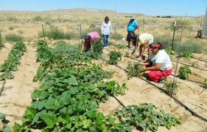 Native American tribe members work in their community garden
