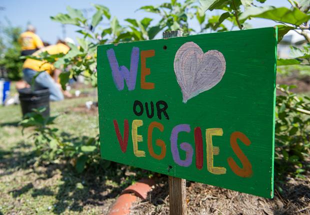 we love our veggies sign, AARP Life@50+ Volunteer Day