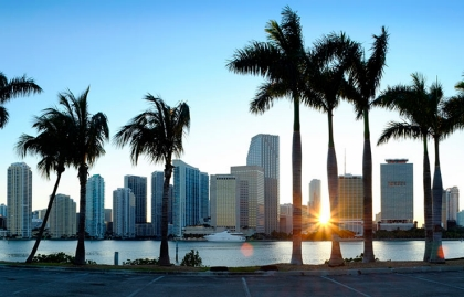 Miami skyline viewed through palm trees.