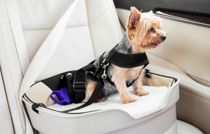 Perro sentado en el interior de un auto - Claves para llevar a tu perro en el auto