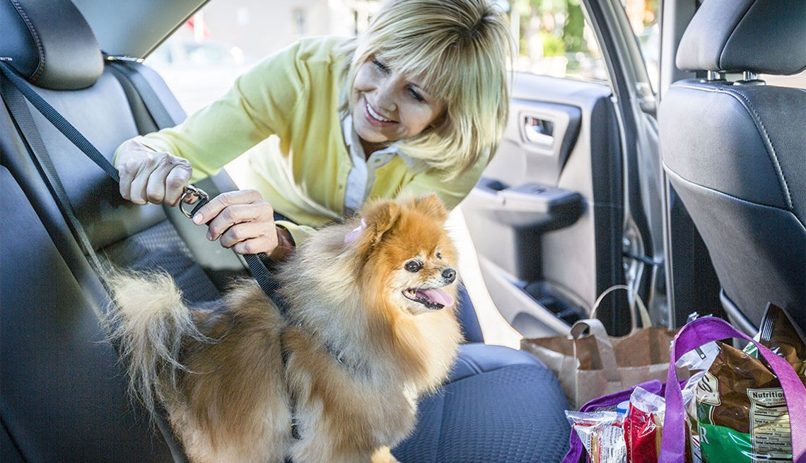 Woman buckles a dog into the backseat, How to Drive Safely With Your Dog