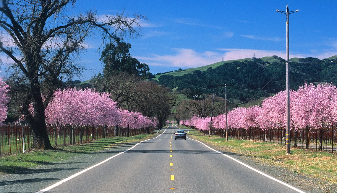 A pink blossom lined road meanders through California wine country