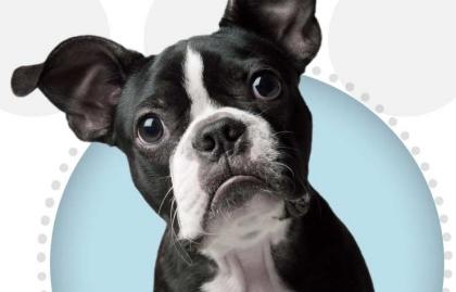 Membership Discount Benefit Pet Plan Dog