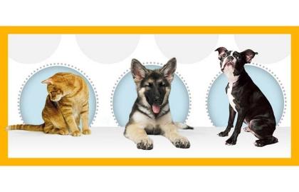 Pet Plan Member Benefit Discounts