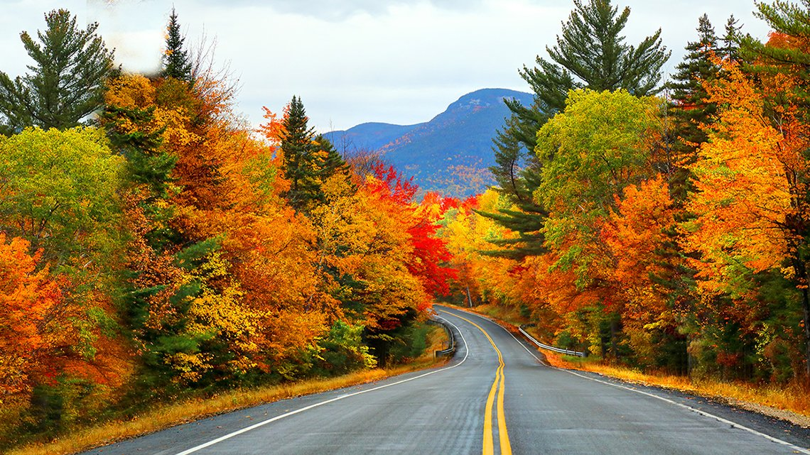 Fall trees, highway