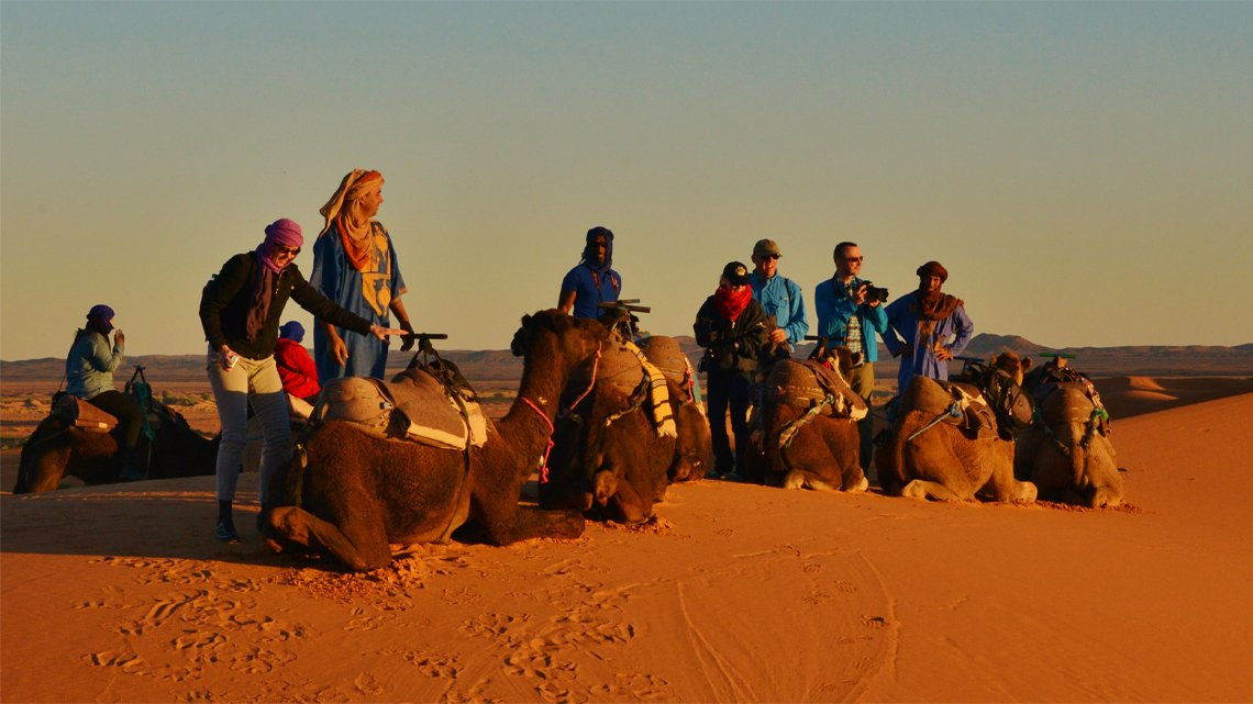 People standing beside line of saddled camels