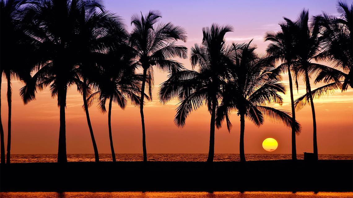 palm trees, ocean, sunset
