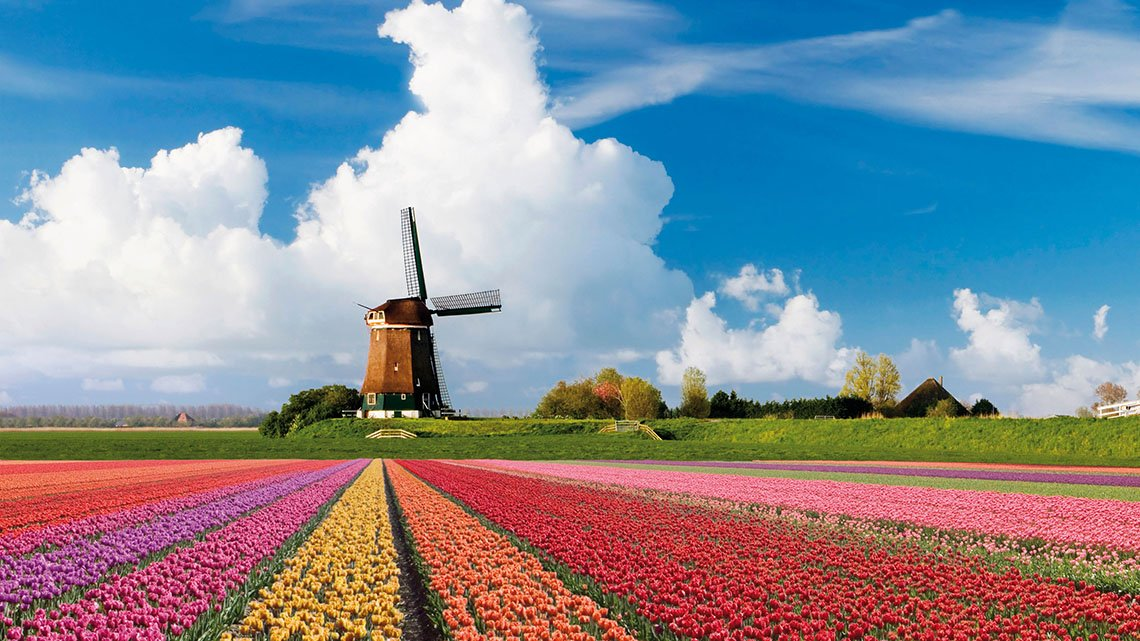 Windmill against clouds,  blue sky, field of colorful flowers in front