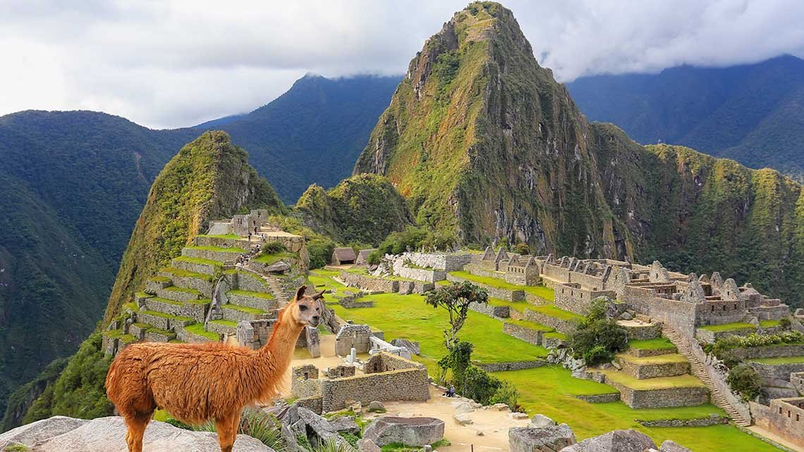 Llama on plateau above ruins in mountains