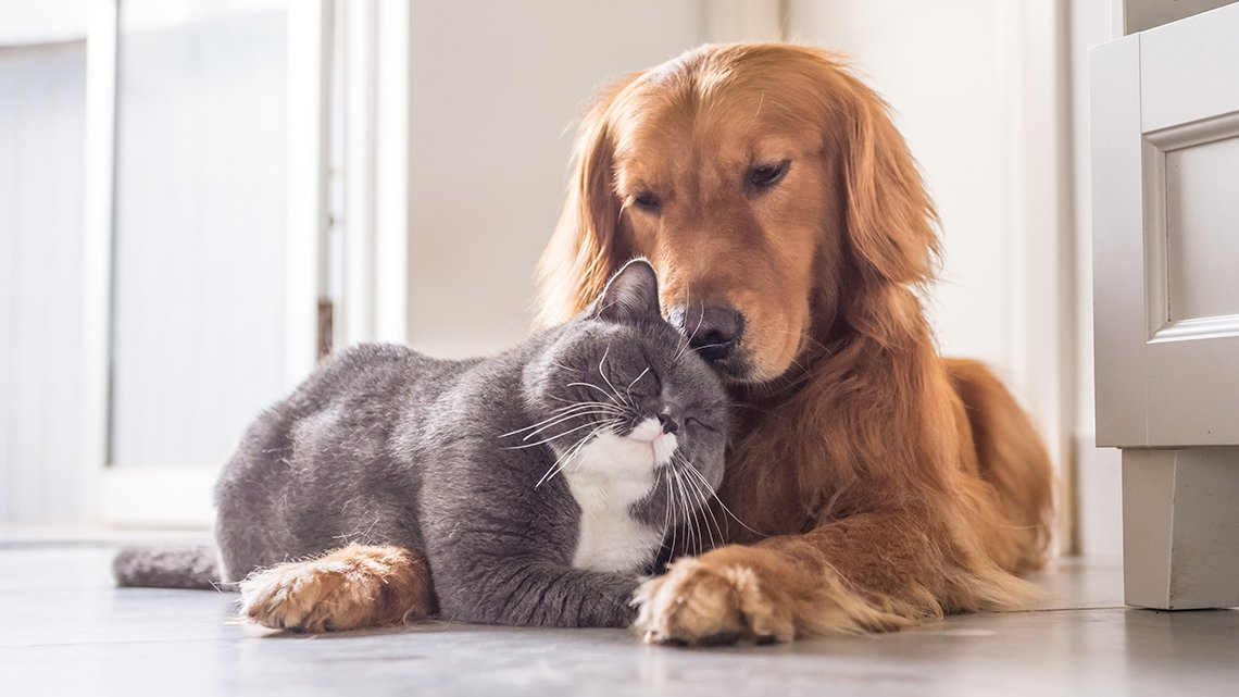 Dog and cat snuggling together on floor