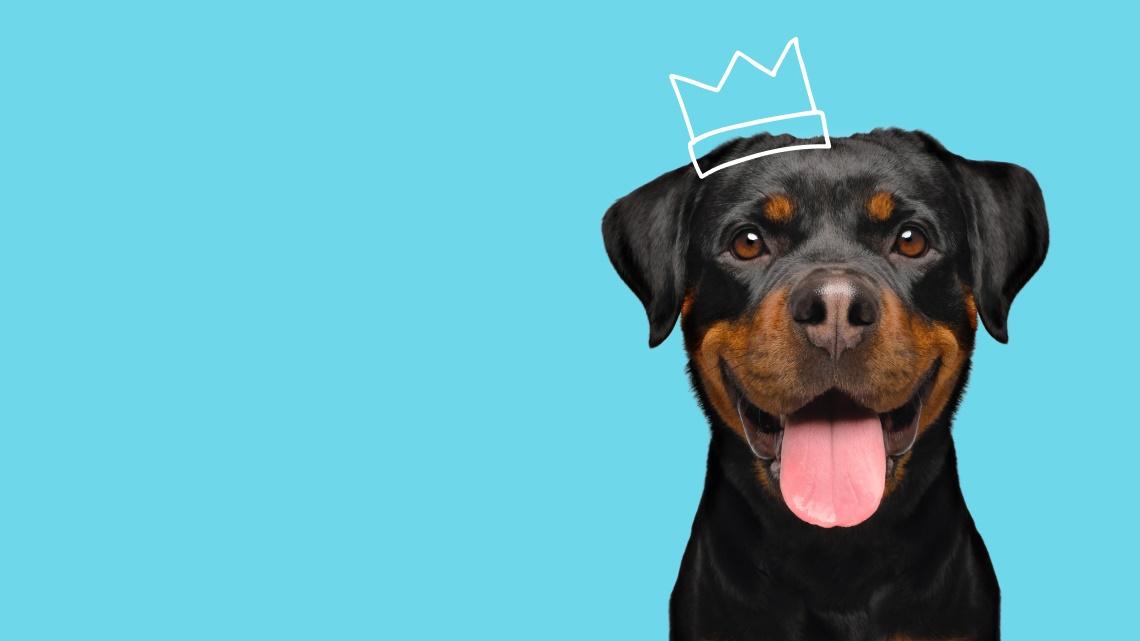 dog, crown drawing