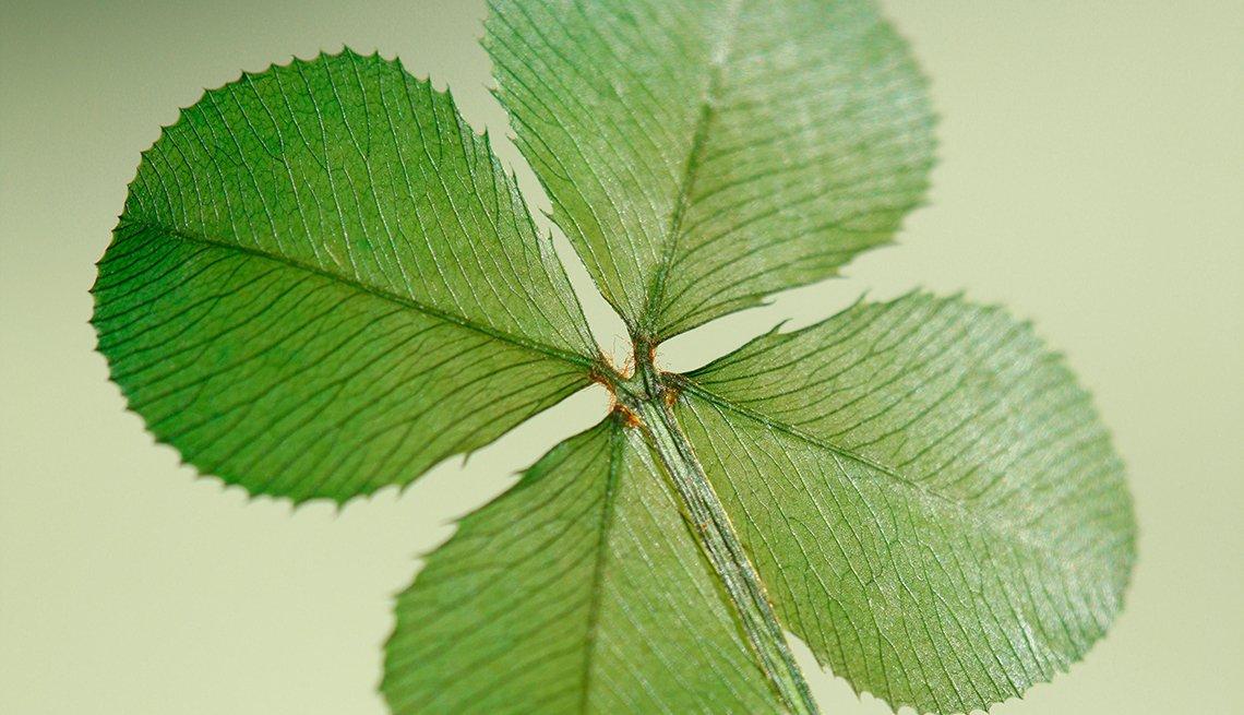 The four leaf clover, an Irish good luck symbol