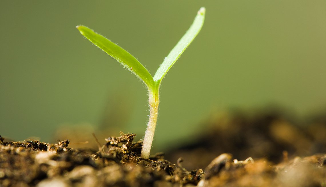 Plant sprouting from soil
