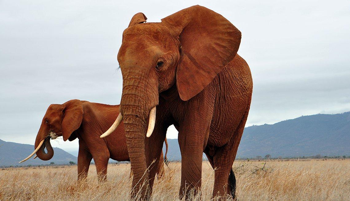 Two wild elephants