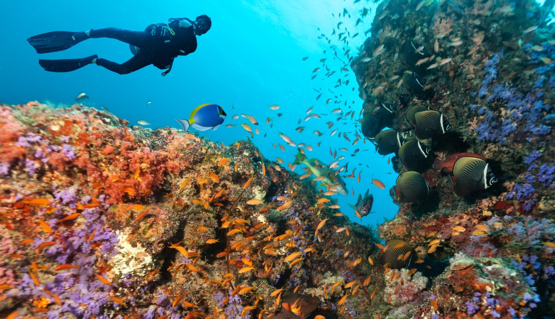 Scuba diver explore beautiful coral reef. Underwater photography in Indian ocean, Maldives