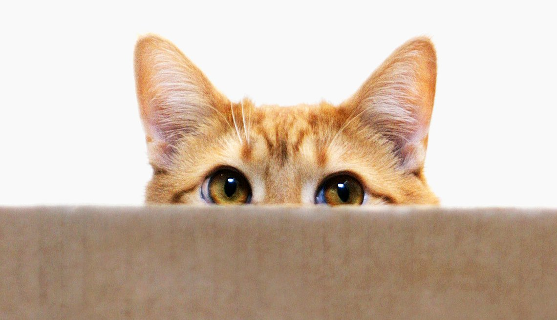 Close up of a cat peeking out from the top of a box