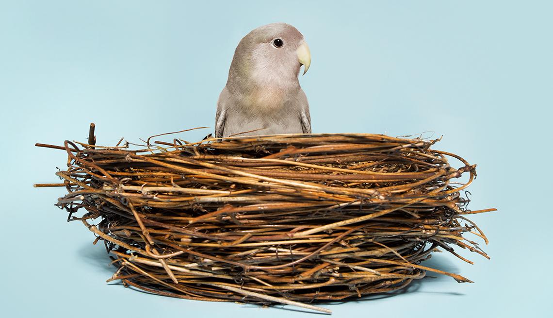 A bird standing outside of a nest